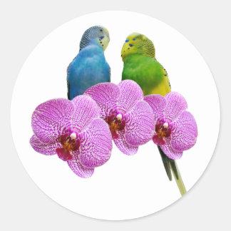 Adesivo Redondo Budgie com orquídea roxa