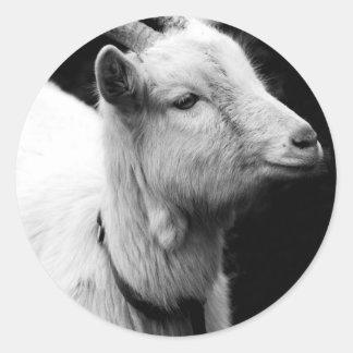Adesivo Redondo cabra