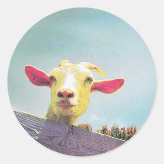 Adesivo Redondo cabra Cor-de-rosa-orelhuda