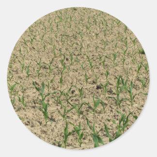 Adesivo Redondo Campo do milho do milho verde na fase inicial