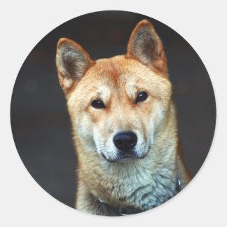 Adesivo Redondo cão