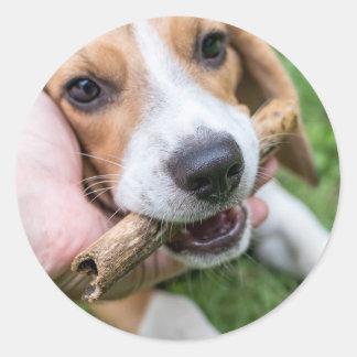 Adesivo Redondo Cão com vara