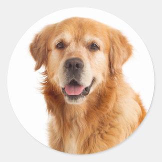 Adesivo Redondo Cão de filhote de cachorro do golden retriever -