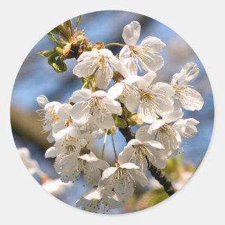 Adesivo Redondo Cherry whites de OM de mero