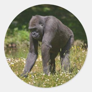 Adesivo Redondo Chimpanzé na grama de florescência