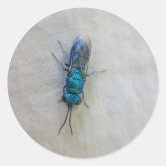 Adesivo Redondo Chrysididae - vespa do cuco