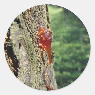 Adesivo Redondo Close up da excreção da árvore de pera da resina