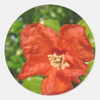 Adesivo Redondo Close up da flor vermelha da romã