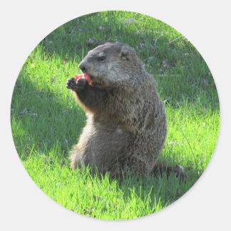 Adesivo Redondo Comer de Groundhog