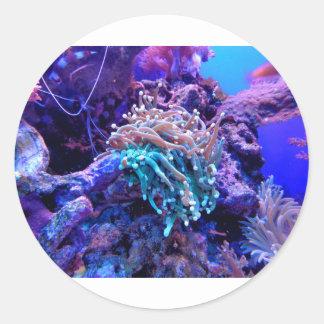 Adesivo Redondo coral-1053837
