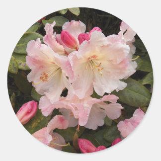 Adesivo Redondo Coram os rododendros cor-de-rosa florais