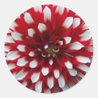 Adesivo Redondo Dália vermelha e branca floral