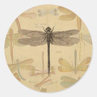 Adesivo Redondo Desenho da libélula do vintage