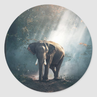 Adesivo Redondo Elefante asiático em um esclarecimento Sunlit da