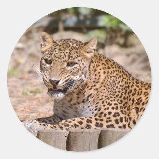 Adesivo Redondo Encontro do leopardo