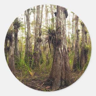 Adesivo Redondo Epiphyte Bromeliad na floresta de Florida