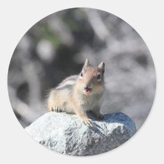 Adesivo Redondo Esquilo à terra
