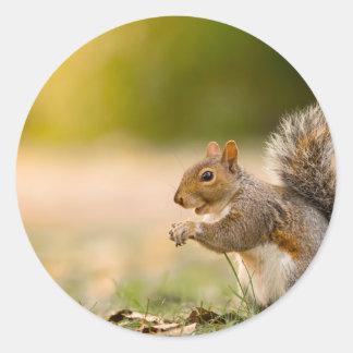 Adesivo Redondo Esquilo com fome