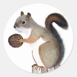 Adesivo Redondo Esquilo do filho do baby-boom