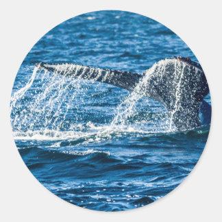 Adesivo Redondo Estado de Washington da baleia de Humpback