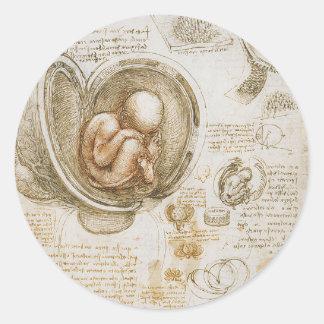 Adesivo Redondo Estudos de Leonardo da Vinci do feto no ventre