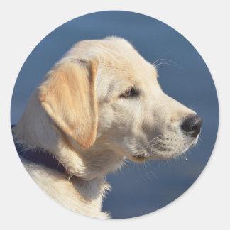 Adesivo Redondo Filhote de cachorro amarelo de labrador retriever