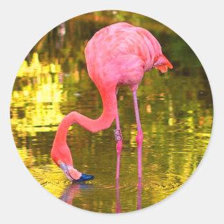 Adesivo Redondo Flamingo americano