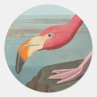 Adesivo Redondo Flamingo americano por John James Audubon 1838