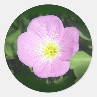 Adesivo Redondo Flor cor-de-rosa da prímula de noite