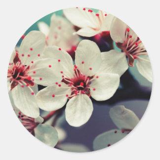 Adesivo Redondo Flor de cerejeira cor-de-rosa, Cherryblossom,