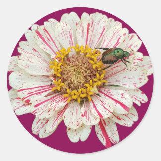 Adesivo Redondo Flor do besouro