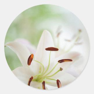 Adesivo Redondo Flor do lírio branco inteiramente aberta