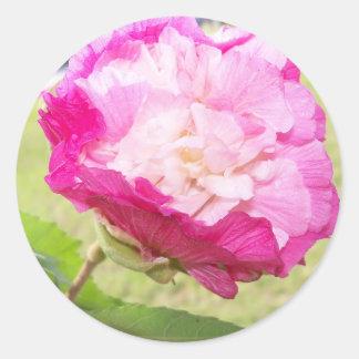 Adesivo Redondo flor variável do rosa e a branca do hibiscus