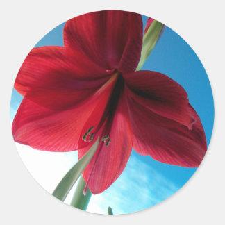 Adesivo Redondo flor vermelha vívida do Amaryllis 108a