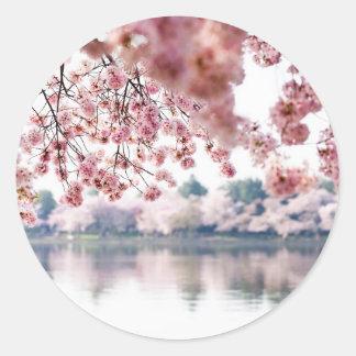 Adesivo Redondo Flores de cerejeira