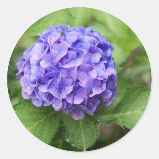 Adesivo Redondo Flores de um hydrangea do francês (macrophyl do