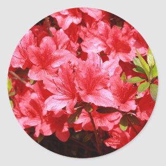 Adesivo Redondo flores do vermelho da azálea