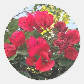 Adesivo Redondo Flores vermelhas do Bougainvillea
