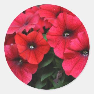 Adesivo Redondo Flores vermelhas do petúnia