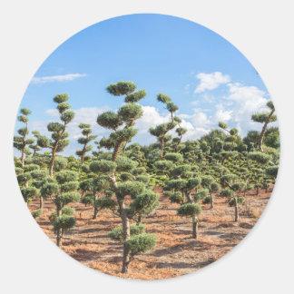 Adesivo Redondo Formas bonitas do topiary nas coníferas