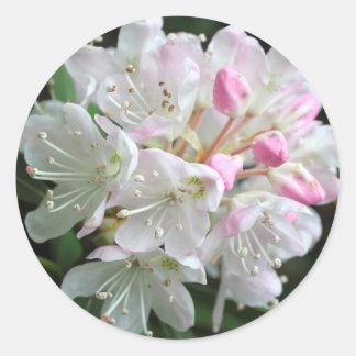 Adesivo Redondo Foto cor-de-rosa da flor do rododendro