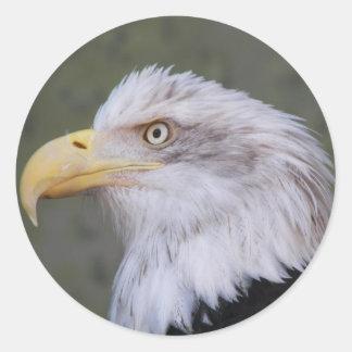 Adesivo Redondo Foto da águia americana
