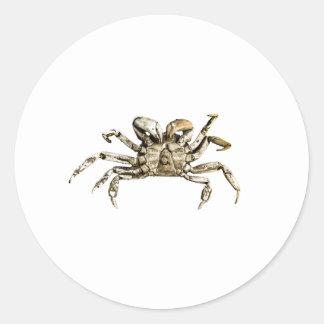 Adesivo Redondo Foto escura do caranguejo