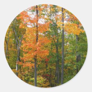 Adesivo Redondo Fotografia da natureza do outono das árvores de