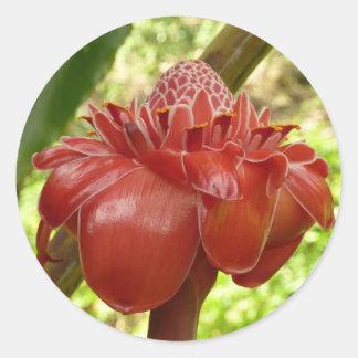 Adesivo Redondo Fotografia tropical da flor do gengibre vermelho