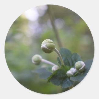 Adesivo Redondo Fotografia verde da natureza do jardim da flor em