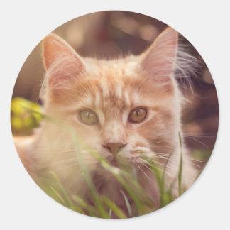 Adesivo Redondo gato