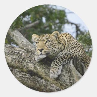 Adesivo Redondo Gato selvagem animal do safari de África da árvore