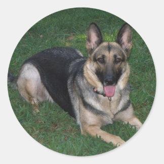 Adesivo Redondo German shepherd