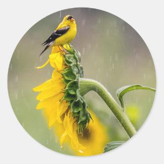 Adesivo Redondo Goldfinch do dia chuvoso